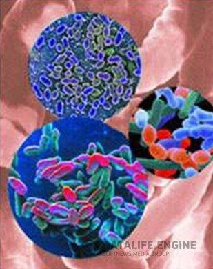 ...анаэробные стрептококки, кишечная палочка, энтерококки и другие микроорганизмы, то при дисбактериозе равновесие...